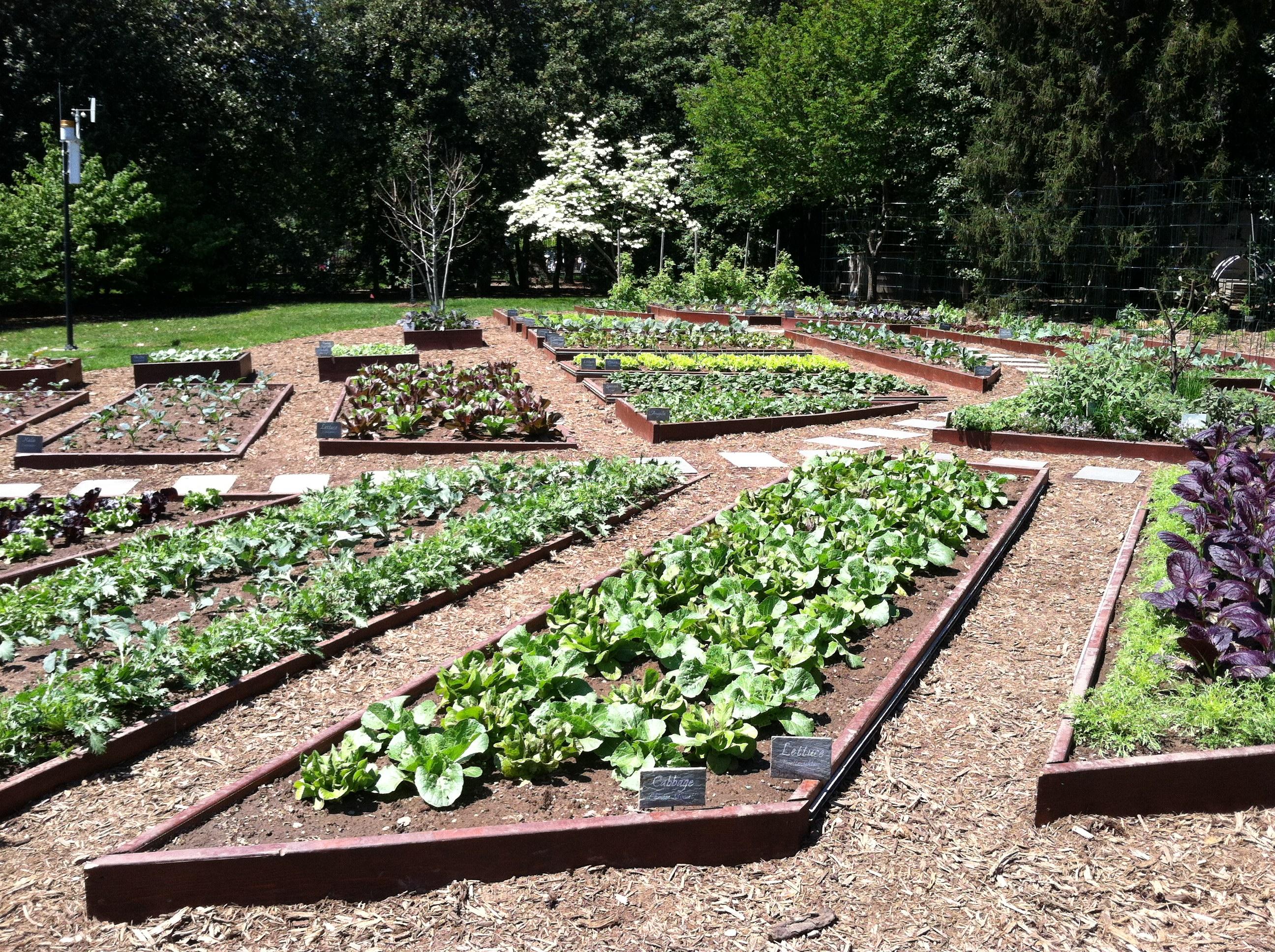 White house spring garden tour pegplant for Kitchen garden