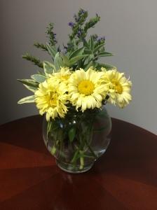 Goldfinch Shasta daisy, La Crema sage, purple flowering hyssop
