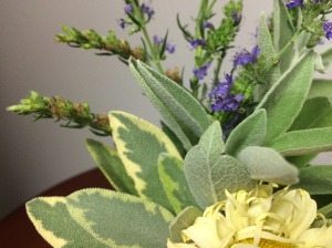 close up of yellow in sage with yellow in daisy contrasting purple hyssop flowers