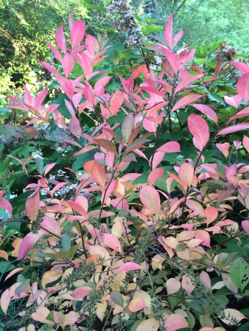 September2014andfieldwildflowers 010