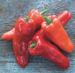 Burpee's Costa Rican, a type of sweet pepper, photo courtesy of the National Garden Bureau