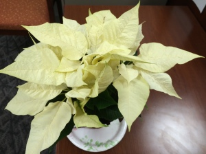 december2015poinsettia 010