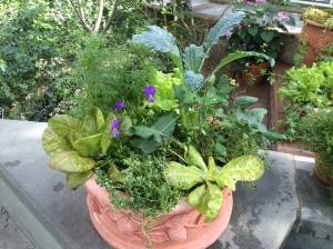kale lettuce thyme viola