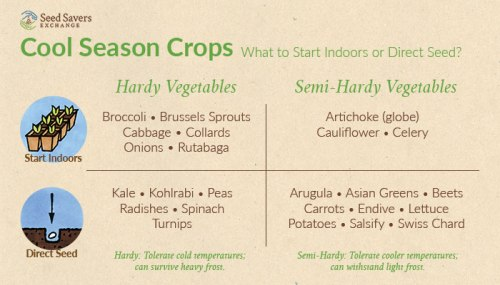 cool-season-crops-infographic