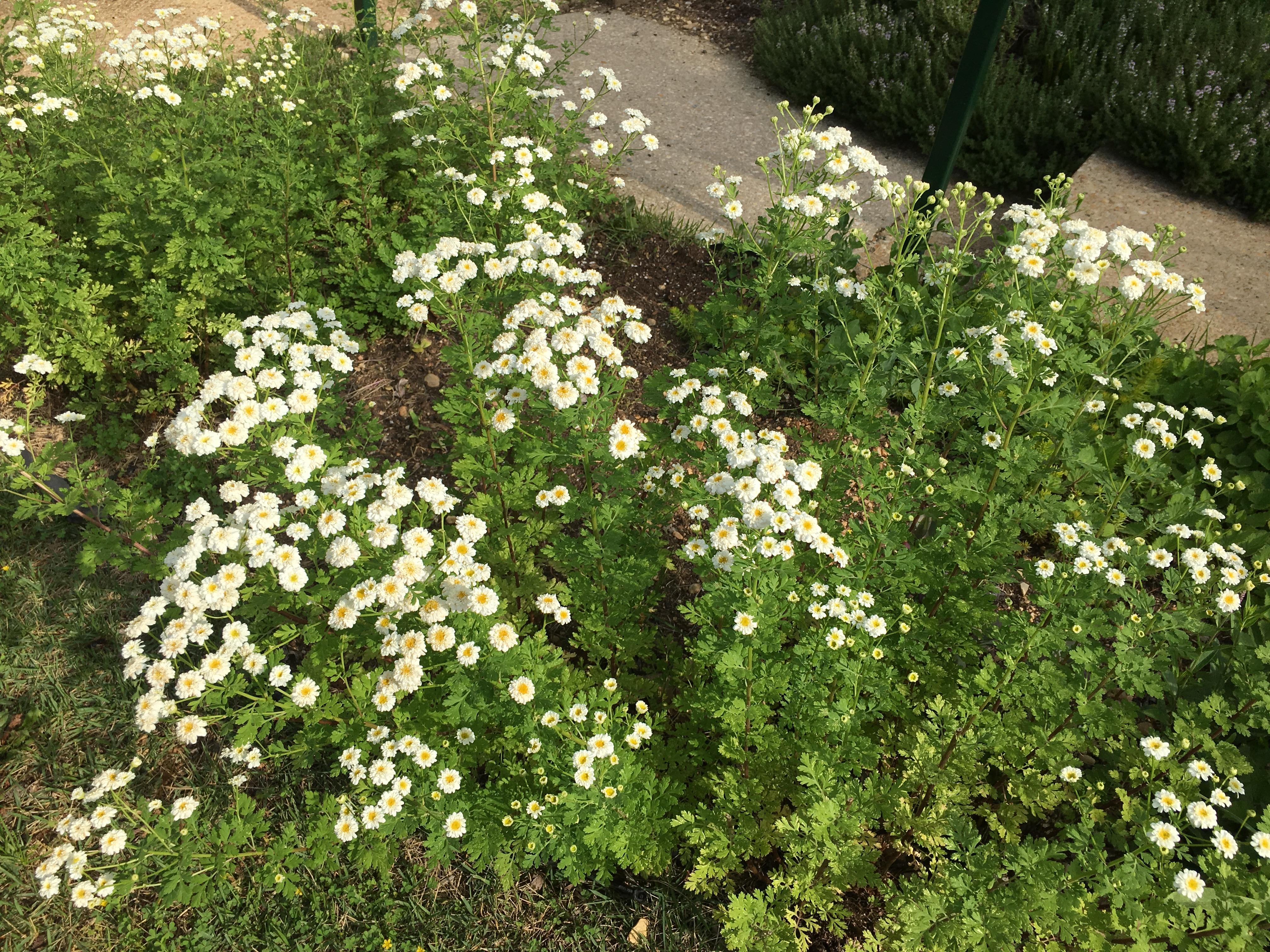 perennial | pegplant